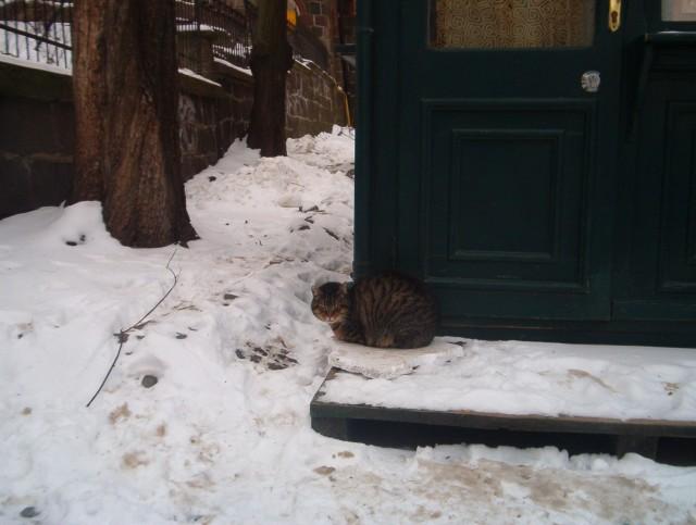 sopocki bezdomny kot