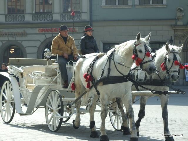 dorożka na krakowskim rynku