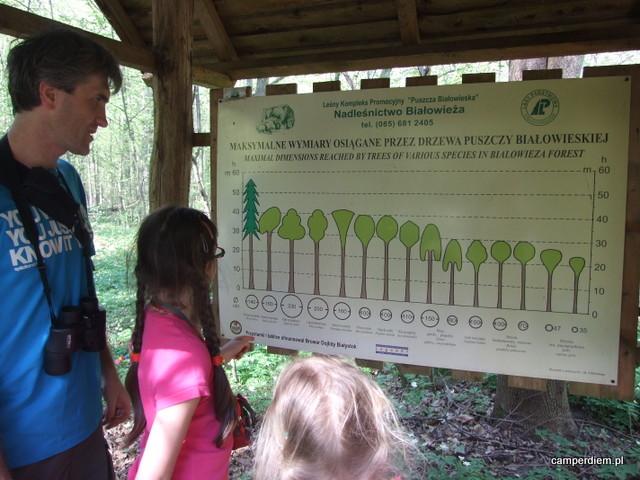 tablica edukacyjna na szlaku do Zagrody Żubrów