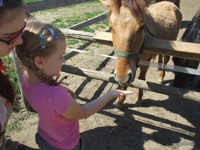 konie w Tatarskiej Jurcie w Kruszynianach