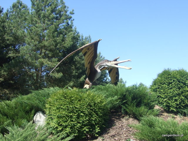 w parku dinozaurów w Jurowcach