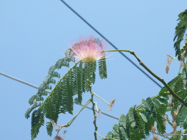 grecka roślinność