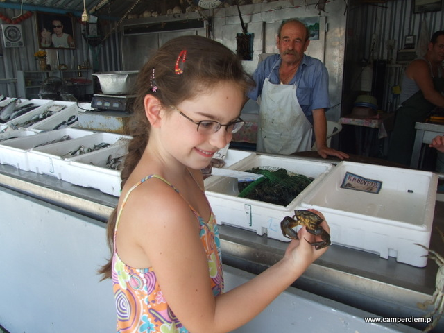 żywy krab w dłoniach