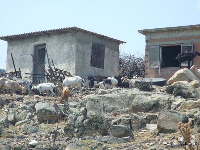 kozy w Ormos Panagias