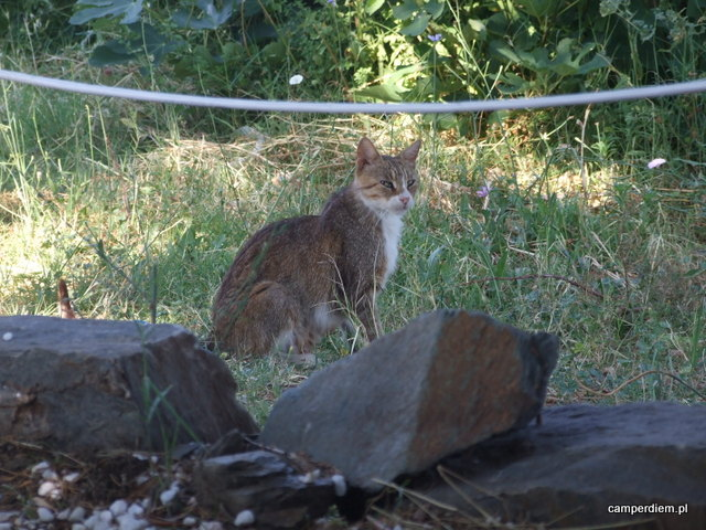 kot w Parthenonas