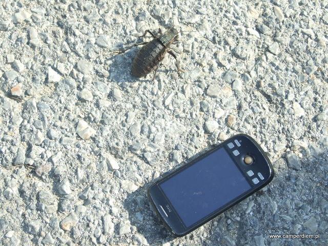 wielki grecki owad