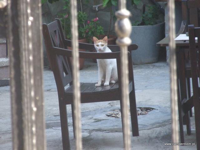kot w Sykia