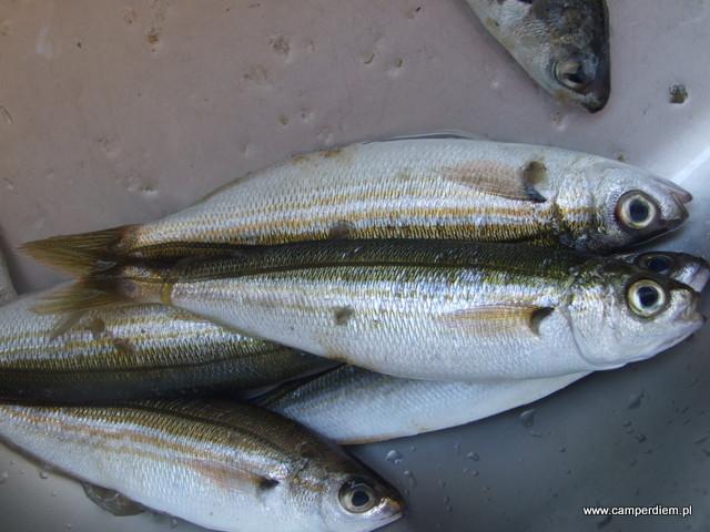 przygotowanie ryb na obiad
