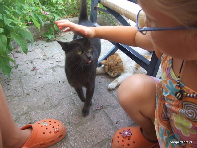 koty w Ormos Panagias