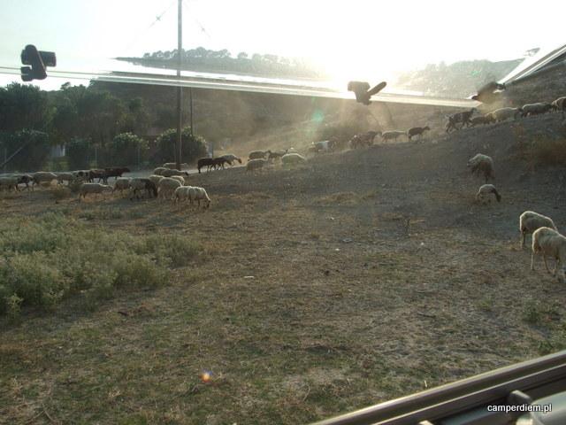 kozy w Livrochio