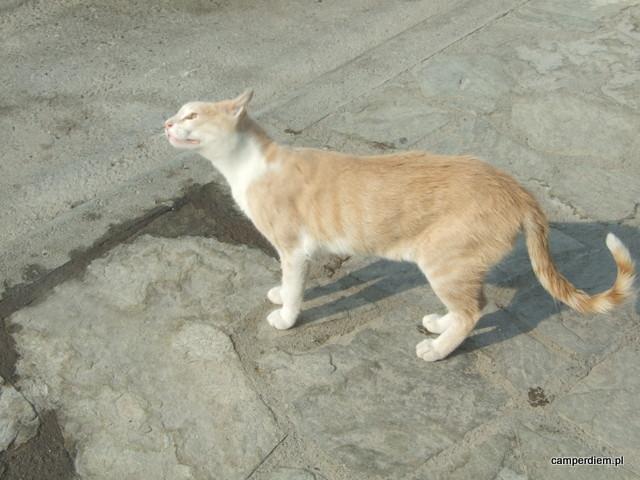 kot w Ormos Panagias