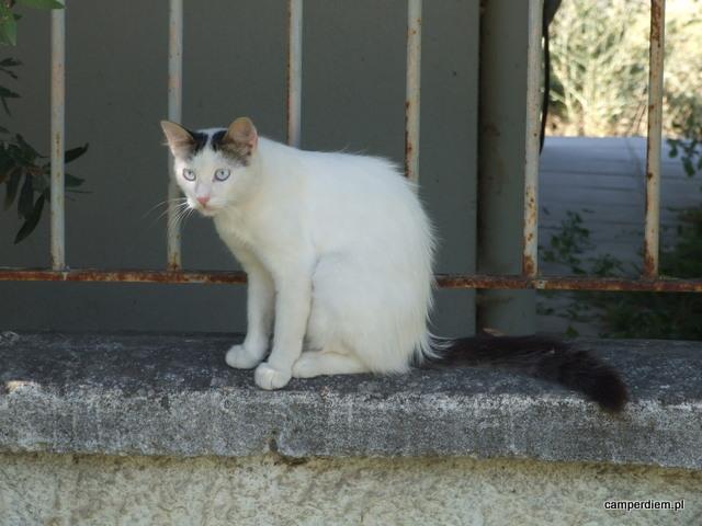 kot w Ag. Triada