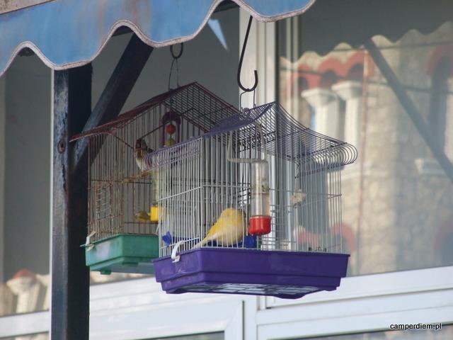 ptaszki w klatce