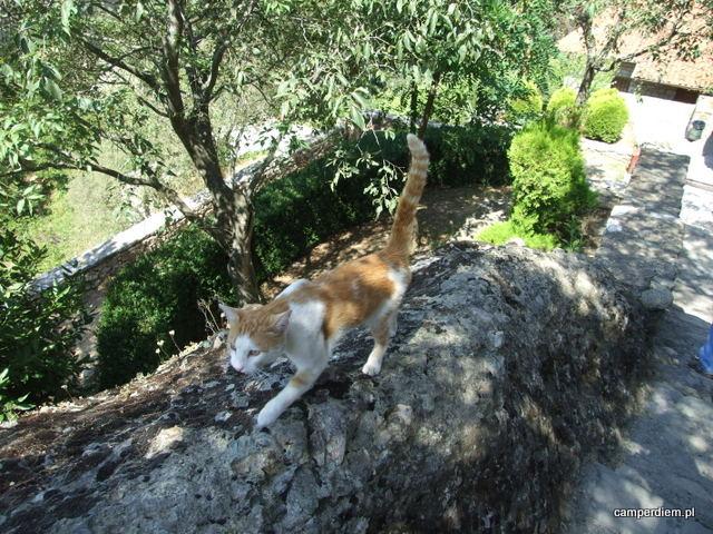 w każdym monastyrze spotykamy koty