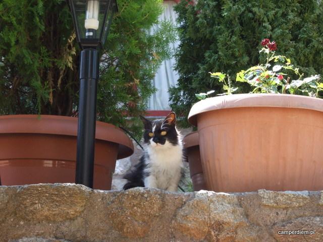 kot w Megalou Meterou