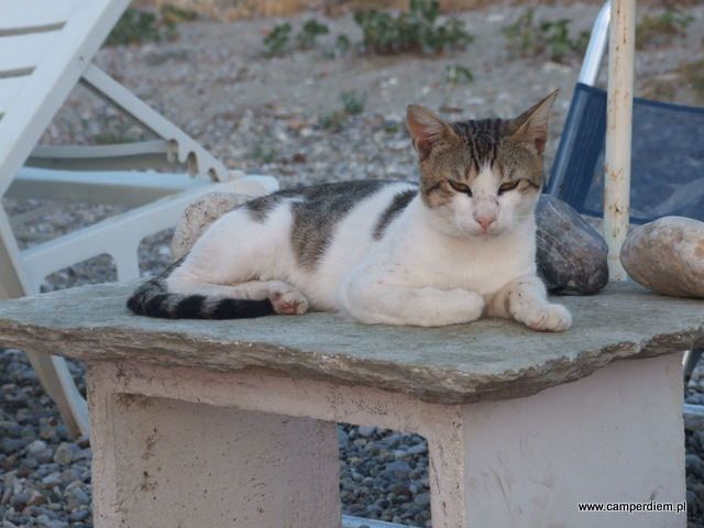 kot na plaży w Kanatadika