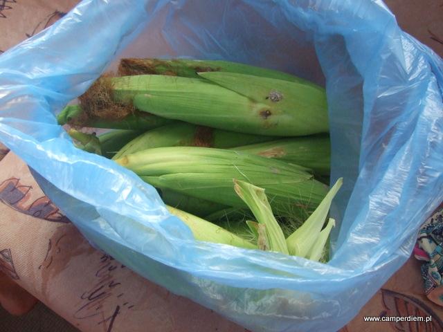 kukurydza podarowana przez Adonisa