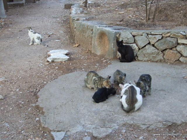 delfickie koty