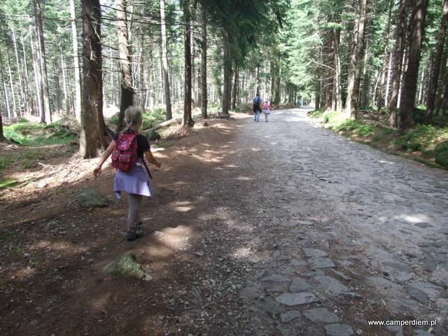 kocie łby na leśnym odcinku drogi na Szrenicę
