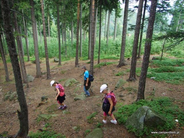 las sosnowy wokół Karpatki