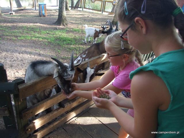 mini-zoo Górecznik