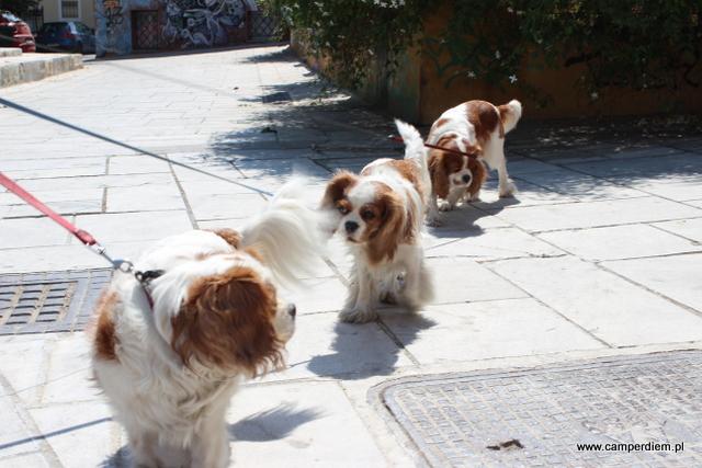 trzy psy z Aten